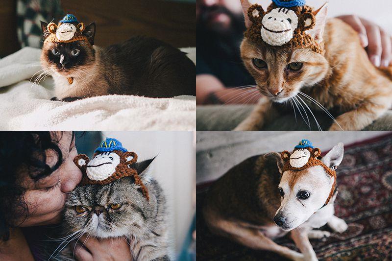 Cat_Hat_533.jpg